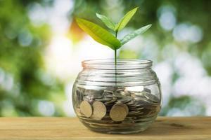 jong boompje groeit op uit een pot met munten foto