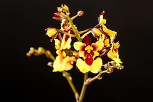 rode en gele orchideeën