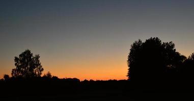 silhouetten van bomen in oranje zonsondergang