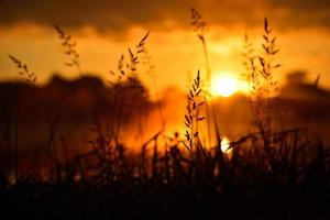 silhouet van hoog gras in oranje zonsopgang foto