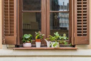 oud raam met planten