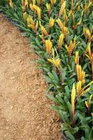 gele en oranje bloemen in een tuin