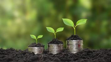 munten en planten worden gekweekt op een stapel munten voor financiën en bankwezen. het idee om geld te besparen en de financiën te verhogen foto