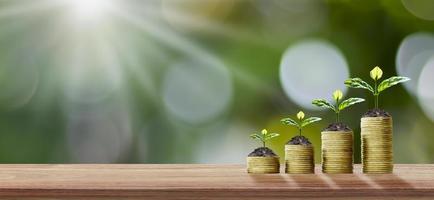 financiële zakelijke achtergrond, bomen planten op munten en houten vloeren, ideeën voor financiële groei en investeringen foto