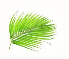 gebogen heldergroen palmblad op wit foto