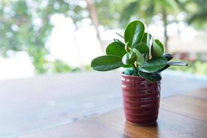 plant op tafel