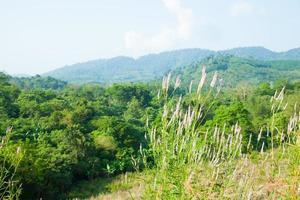 gras op de heuvel