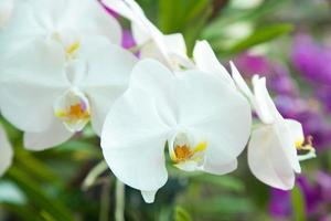 bloemen van witte orchideeën