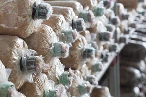 gestapelde champignonzakken foto