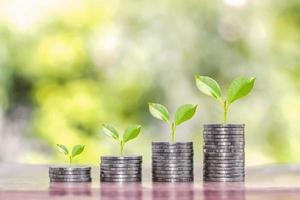 boom groeit op een stapel geld tegen wazig groene natuur achtergrond investeringen en financiële groei idee foto