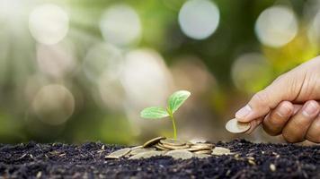 bomen planten op een stapel geld in de grond en wazig groene natuur achtergrond, financiële en investeringsideeën voor bedrijfsgroei foto