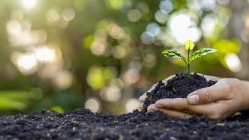 close-up van een menselijke hand die een zaailing vasthoudt, inclusief het planten van zaailingen, het concept van de aardedag, de campagne voor het verminderen van de opwarming van de aarde en het beheren van ecologisch evenwicht foto