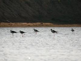 vogels staan in water foto