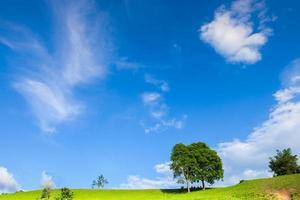 groen gras en bomen met een blauwe lucht foto
