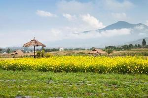 gele bloemen en mistige bergen foto