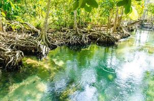 een mangrovebos in de groene rivier in krabi foto