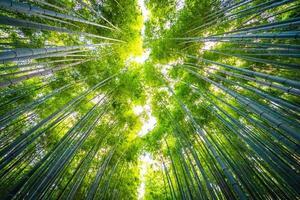 prachtig bamboebos in arashiyama, kyoto