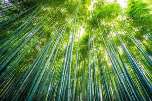 prachtig bamboebos in arashiyama, kyoto foto