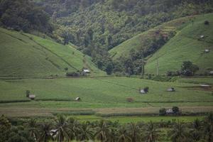 weelderige groene bergen