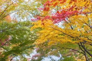 heldere herfstbladeren foto