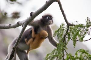 aap met baby op een boom foto
