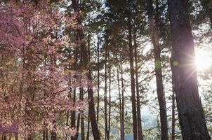 zonneschijn op bomen foto