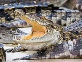 krokodil in rust foto