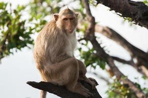 aap zittend op een tak foto