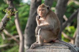 aap op een pilaar foto