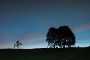 bomen bij zonsondergang foto