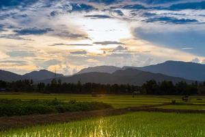 ondergaande zon boven een rijstveld