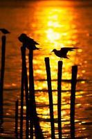silhouetten van vogels bij zonsondergang foto