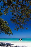 boom op een strand met een boot foto