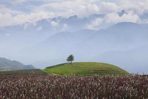 boom op een groene heuvel