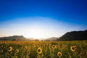 zonnebloemveld en bergen gedurende de dag foto