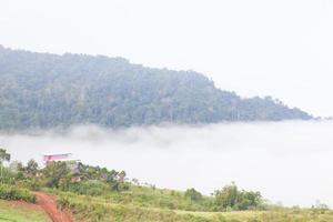 met mist bedekt bos op de berg foto