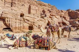 kamelen die bij de schatkamer rusten, al Khazneh uitgehouwen in de rots bij Petra, Jordanië