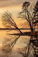 omgevallen boom gebogen over de rivier de gauja bij zonsondergang in letland
