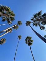 hoge palmbomen vanuit een lage hoek