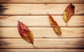 bruine gedroogde bladeren op een houten achtergrond foto