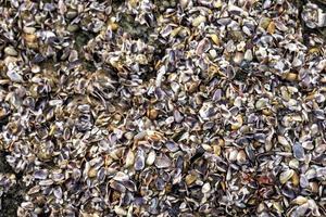 kleine schelpen op het strand foto