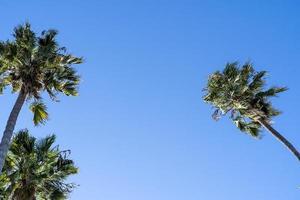 lage hoekmening van hoge palmbomen in de blauwe lucht