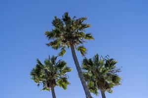 palmbomen in een blauwe lucht