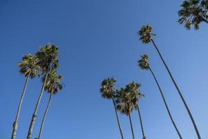 een stel hoge palmbomen in een strakblauwe lucht