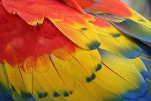 kleurrijke veren voor achtergrond of textuur foto
