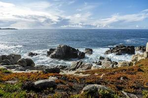 ijsplanten kruipen op de rotsen nabij de kustlijn van de Stille Oceaan foto