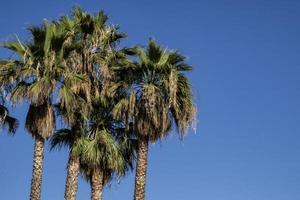 palmbomen op een zonnige dag met een blauwe lucht