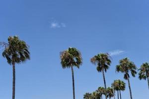 palmbomen op een blauwe hemelachtergrond