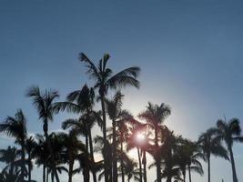 palmbomen bij zonsondergang