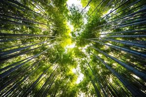 bamboebos in het bos in arashiyama, kyoto foto